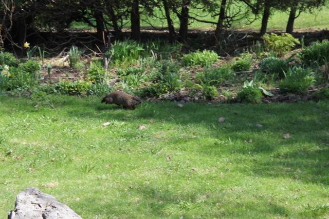 groundhog2