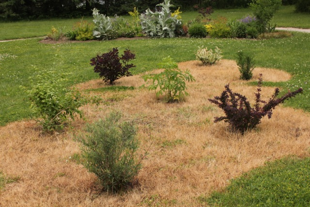 shrubs3