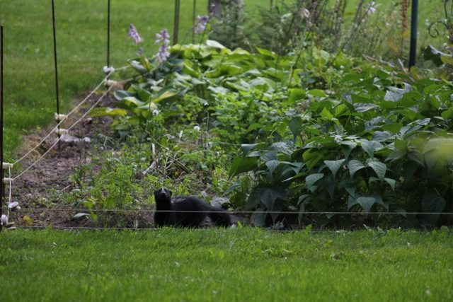 skunkgarden