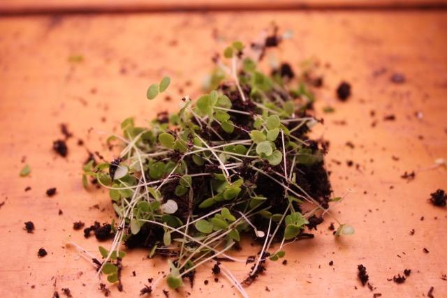 seedlings4