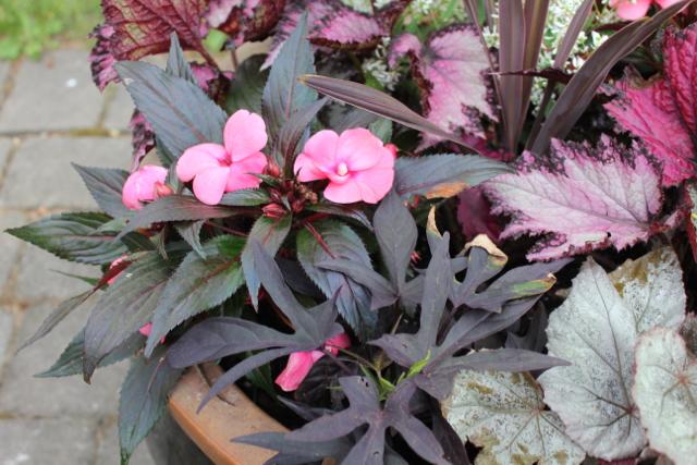 Pink/grey pot