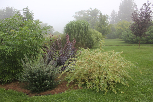 Misty Morning 2015