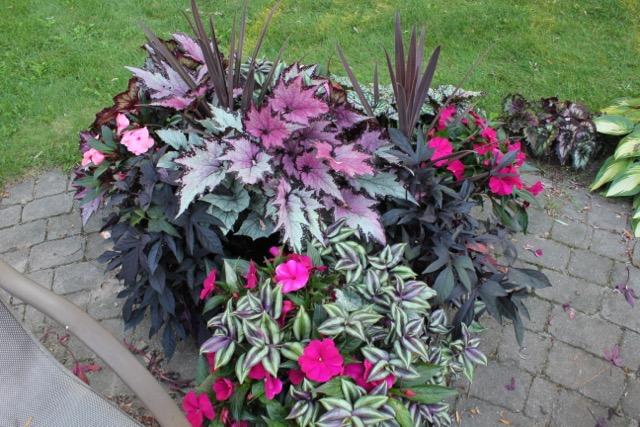 Begonia planters
