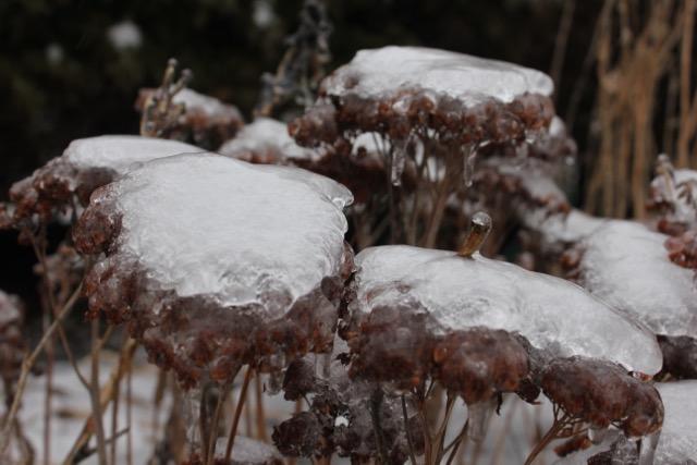 Ice Storm Mar