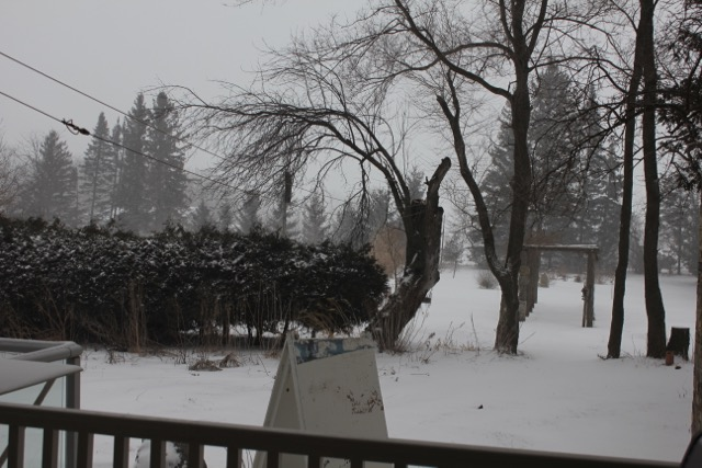 Snow Mar 1 -2