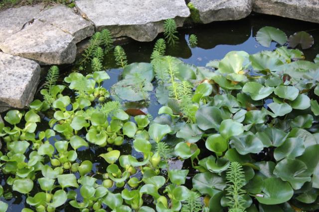 Pond 2016