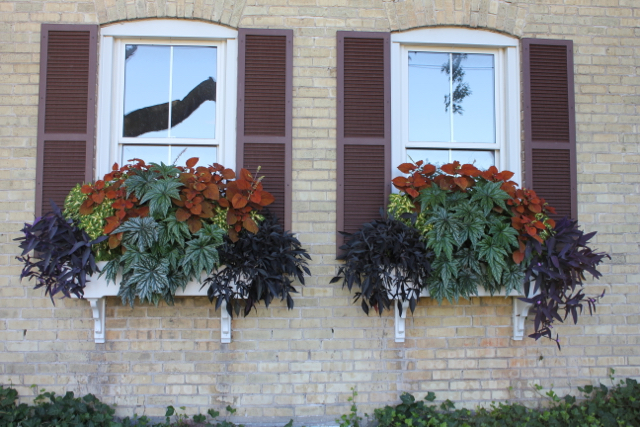 Window Box 2012