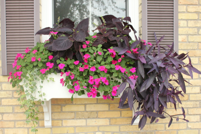 Window Box 2016