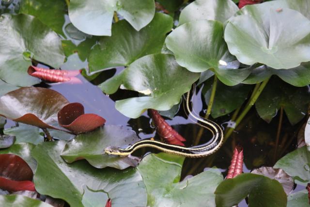 Snake Pond
