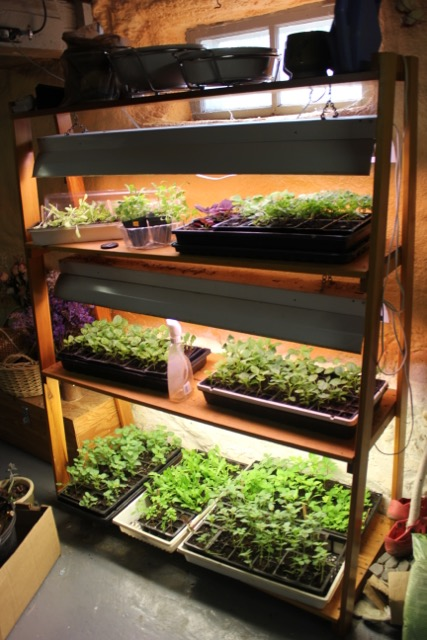 Seedling - light shelves
