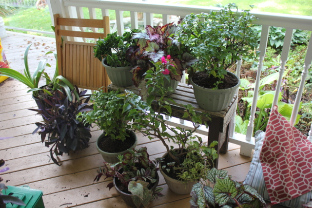 Fall Cleanup Plants 2016
